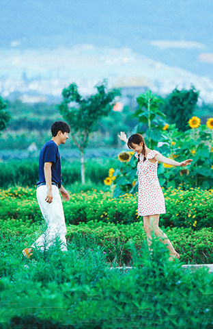 大理-向日葵之恋